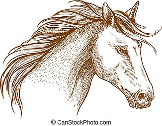 Horse sketch icon of arabian stallion - Sketched stallion...