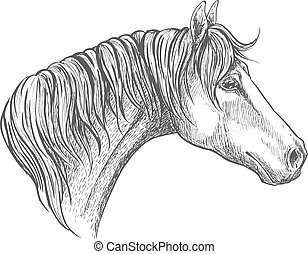 Speedy racehorse of american quarter breed sketch -...