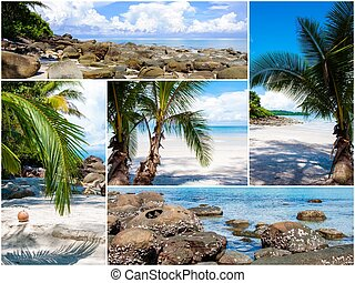 Photo collage of tropical beach with palm trees