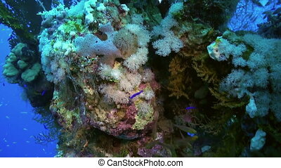 School flock of glass fish and soft coral on reef - A flock...