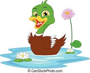 caricatura, pato, natación