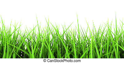 Green Grass On White Background - 3D generated Green Blades...