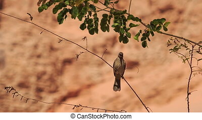 Closeup Small Bird Sits on Thin Branch at Stony Background -...