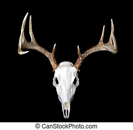 European Deer Mount Top View - A top view of a european deer...