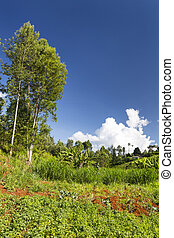 Kenyan Farm Landscape - Agriculture in a beautiful valley in...