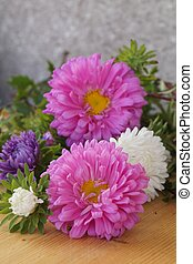 Colorful flowers - Asters, Callistephus chinensis