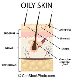 Illustration of The layers of oily skin on the white...