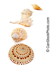 seashells - a pile of different seashells isolated on a...