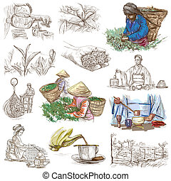 Tea Processing. Agriculture. An hand drawn illustration. -...