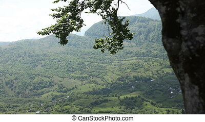 Tree and breathtaking mountains - Beautiful leaves of the...