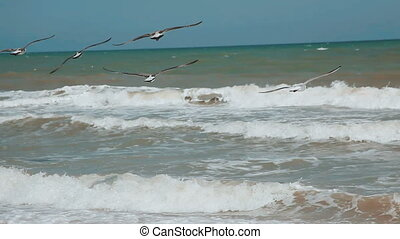 Gull over the sea. Hungry gulls circling over the summer beach in search of food on a background of sea. Sea birds in flight in search of food.