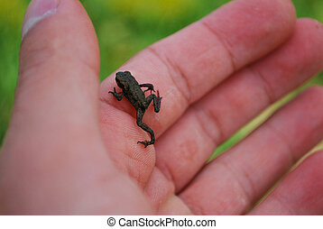 malutki, froglet