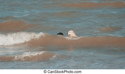 Two dog jumping into the sea to fetch a stick.