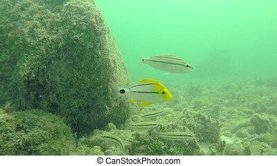 Reef fish Fl Keys Four - Tropical fish underwater Florida...