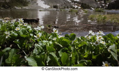 1207 Mountain Stream Wildflowers - Classic High Mountain...