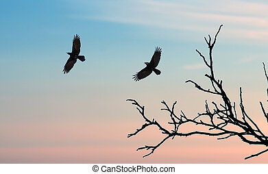Black crows against sunset sky - Silhouette of a crows...