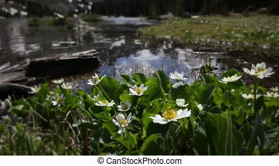1208 Mountain Stream Wildflowers - Classic High Mountain...