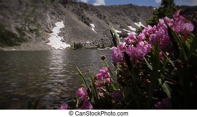 (1209) Mountain Stream Wildflowers - Classic High Mountain...