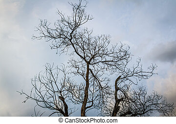 dry branch tree with dark clound - the dry branch tree with...