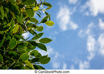 Green leaves and blue sky with clound