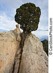 Tree On White Rock