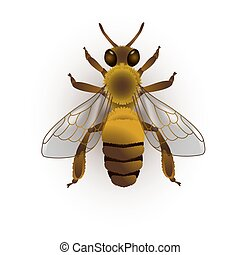 Bee. Vector illustration