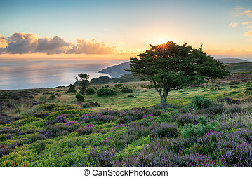 Exmoor Sunrise - Sunrise over Porlock common on the Exmoor...
