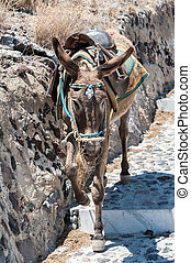 Donkey on stairs of Santorini - Donkey on stairs of Thira,...