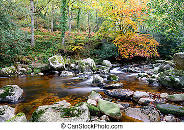 Autumn on Dartmoor - Autumn on the river Plym as it flows...