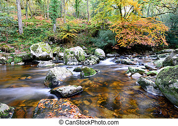 Dewerstone Woods on Dartmoor - The river Plym at Dewerstone...