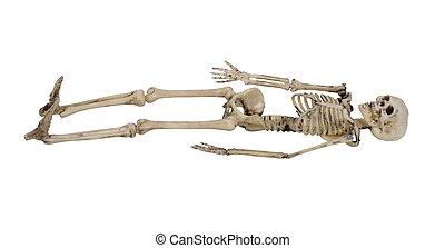 Skeleton - The skeleton is the internal framework of the...
