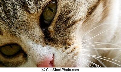 4K video of cat close-up - 4K UltraHD video of cat close-up