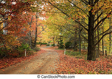 Country road meandering through trees with autumn foliage -...