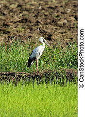 Image of stork on nature background