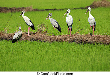 Image of group stork on nature background