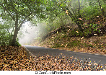 Road in the forest, leafs falling and myst, Anaga, Tenerife,...