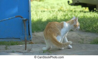 redhead little kitten walking outdoors slow motion video -...