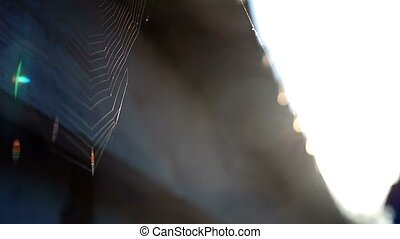 web rooftop the solar light morning spider nature sunlight slow motion video