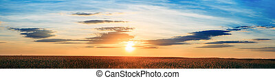 Panorama Of Eared Wheat Field, Summer Cloudy Sky In Sunset...
