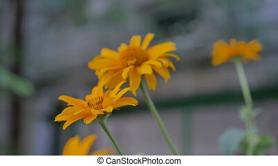 yellow flower on a background green slow motion video -...