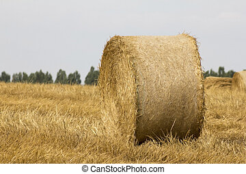 Straw bales at sunset - View from farmland full of straw...