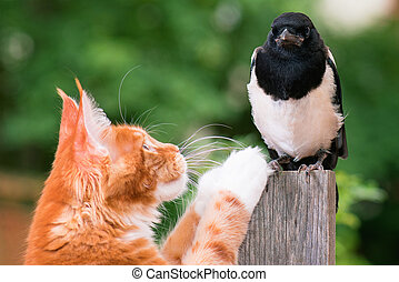 Cat hunted a bird - Domestic red Maine Coon kitten, 4 months...