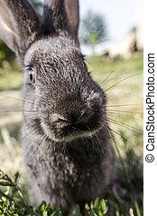 Rabbit in the grass - little rabbit on green grass...