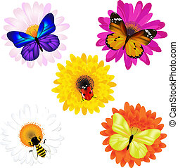 Vector Set Of Insects On Daisies - Vector Set From...