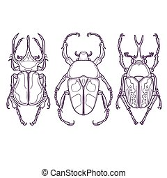 Set of Beetle Bugs, Insect Outline - Vector Illustration of...