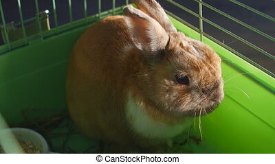 Pet rabbit in cage - Pet rabbit in a cage