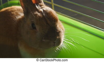 Close up of Pet rabbit in cage - Pet rabbit in a cage