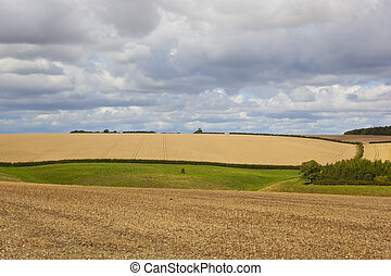 yorkshire wolds agriculture - agricultural scenery in the...