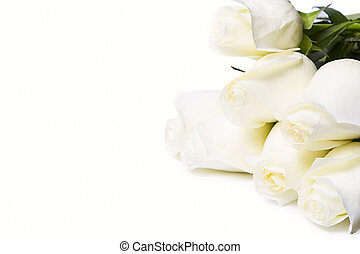 Roses Isolated On The White Background