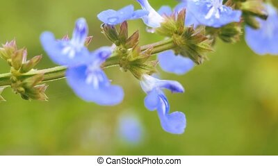Background of blue flowers in the garden